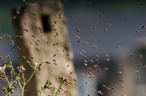 6578 - (株)エヌリンクス 売り板ちょっとかじったら蜂の巣つついたように、 既存の連中逃げていくんだろうな…