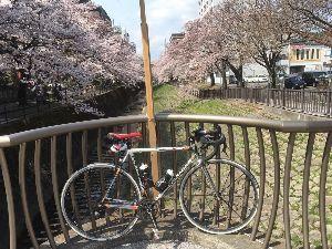 OO 自転車に乗ろう3 OO いろは坂を登って、愛宕公園の中の桜を眺めて、、、  多摩センターの乞田川の桜、、、
