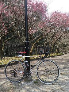 OO 自転車に乗ろう3 OO こちらの木下沢梅林は8分咲きでしょうか!?  今日は、朝8時半にしゅっぱこー!  玉川上水沿いに拝島