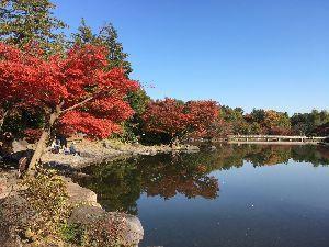 OO 自転車に乗ろう3 OO なかなか走れず、、、  今日の東京は穏やかな冬晴れ? 折角の振替休日でしたが、年末を控えて、おかかか