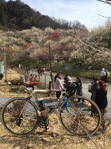 OO 自転車に乗ろう3 OO 今日は・・・  高尾の梅はどんな感じとおかかに言われ、、、高尾梅まつり!?に行ってきましたー&sig