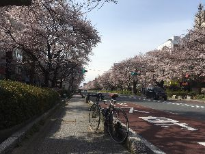 OO 自転車に乗ろう3 OO みなさん、お久でした〜m(_ _)m  今日は、今週の日曜の振替休日を前取りして、桜巡りポタに・・・