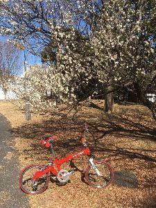 OO 自転車に乗ろう3 OO 小春日和のこの時期はやはり梅見ポタ・・・ まずは直ぐそばの昭和記念公園に入り込むと・・・