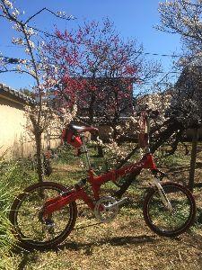 OO 自転車に乗ろう3 OO やむなく、多摩サイを下ってワ××ロード府中多摩川店で目の保養を・・・ ジオス