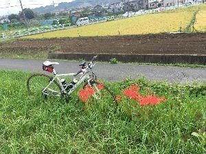 OO 自転車に乗ろう3 OO 今日は久しぶりのピーちゃん号でしたー(o^^o)