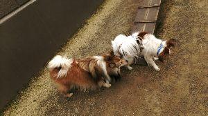 犬友募集してます 今日はとっても暖かな日でしたね♪~♪ d(⌒o⌒)b♪~♪ランラン とっても久しぶりに 藤枝のカイン