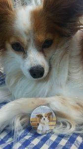 犬友募集してます 昨日言っていた缶バッジが届きました*(๑˘ᴗ˘๑)* 早速お散歩バッグに取り付けます