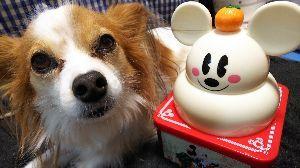 犬友募集してます (*´∀`)φ…..A HAPPY NEW YEAR