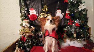 犬友募集してます ゚・*:.。. ☆゚・*:.。. ☆ ゚+。:.゚(メリ^▽^クリ)゚.:。+゚ ☆.。.:*・゜☆