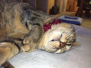 ゴルフへ行こうよ♪ 夢  猫を自宅に連れて帰って、もう10ヶ月になるんでしょうか。 彼女を家族に迎えてから、私も彼女と一
