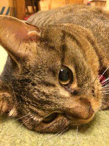 ゴルフへ行こうよ♪ 最近の様子  うちの猫も、日々健やかにお過ごしです。 とても可愛いです。 野良猫だった彼女を保護し、