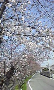 ゆっくりと おはようございます^^ 土曜日は奈良も暑いくらいのいい天気でした うってかわって日曜日は雨嵐・・・