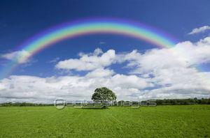 ココロノナカをつぶやいてみる 薄曇りの空に  虹が架かっていた  まるで私のココロノナカ