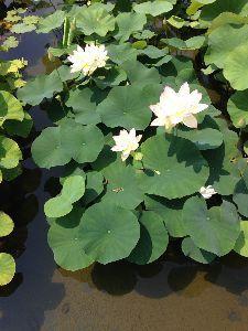 アビダンマについて ケビンさん、こんばんは〜  綺麗な紫陽花の花だなぁ  > 暑い日が続きますねー > 外に
