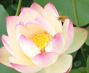 アビダンマについて 🌷🌸🌹🌻🌼🌺  今日は、成道会(じょうどうえ)でしたね!  日本では12月8日にお釈迦さまが悟りを開