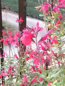 花の名前教えて下さい うちの庭に今咲いています。 同じ種類の❀ですかねぇ〜