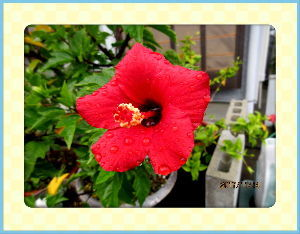 庭の花で四季を楽しむことに・・・ 快晴の上天気に・・・  80歳誕生日前に無事を記念に  心臓のCT検査を初めて・・・  検査結果は明