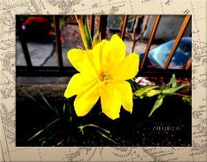 庭の花で四季を楽しむことに・・・ 日中の暖かさは何処へやらで  夕方には風が一気に冷たく・・・  明日は厳しい寒さになりそうだね・・・