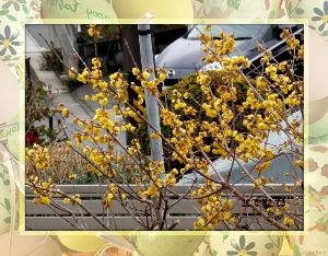 庭の花で四季を楽しむことに・・・ 陽射しが射しこんできて部屋が明るく・・・  今日は暖かな日和になりそうだね・・・  出かける予定もな