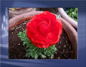 庭の花で四季を楽しむことに・・・ 陽射しの弱い不安定な天気に・・・  吹き抜ける風が少々冷たく小寒いね・・・  サッカーJリーグが開幕