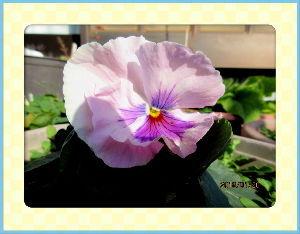 庭の花で四季を楽しむことに・・・ 今日も陽射しが射しこみ小春日和に・・・  部屋に陽射しが射しこみ室温も20度に・・・  暖かさに便乗
