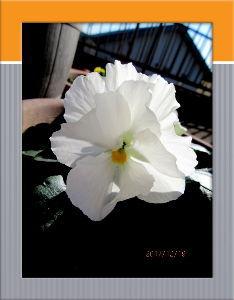 庭の花で四季を楽しむことに・・・ 今日も厳しい冷え込みでしたが  日中は暖かな小春日和に・・・  家内が右足の膝の検査日で送迎係りを・