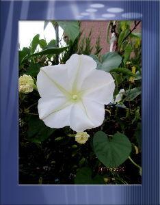 庭の花で四季を楽しむことに・・・ 今朝も心地よい涼しさに目覚めバッチリ・・・  体調の絶好調の日々が続き感謝感謝だね・・・  昨日もア