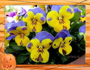 庭の花で四季を楽しむことに・・・ 風のない穏やかな日和に・・・  グランドゴルフには最高のコンディション日和・・・  何時ものシニアメ