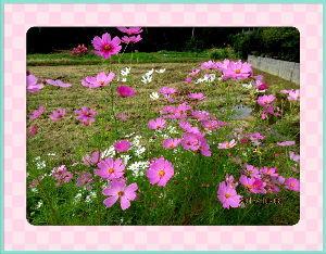 庭の花で四季を楽しむことに・・・ ちょい陽射しに強い日和で夏日に・・・  好きなアユ釣りをしてれば暑さは何処へやら・・・  アユ釣りも