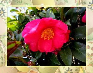 庭の花で四季を楽しむことに・・・ 暖かな陽射しの射しこむ快晴・・・  庭に出れば吹き抜ける風は冷たいね・・・  陽射しがあるので気温の