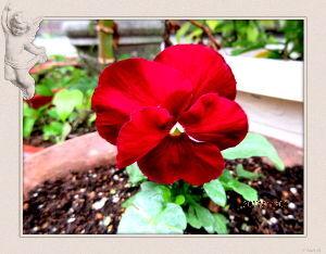 庭の花で四季を楽しむことに・・・ 今日は終日小雨模様の愚図付いた天気・・・  暇つぶしに買い物頼まれてスーパーまで・・・ ・・・ 特売