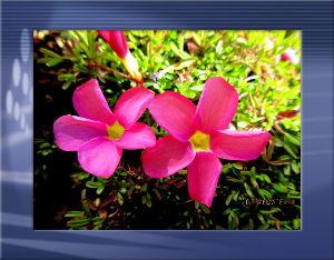 庭の花で四季を楽しむことに・・・ 今朝は厳しい冷え込みでしたが  陽射しのお蔭で徐々に暖かな日和に・・・  確定申告に出かけて無事に終