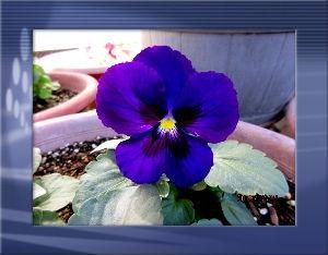 庭の花で四季を楽しむことに・・・ いよいよ今日から師走だね・・・・  アユ釣りやハゼ釣りが終わり暇つぶしが大変・・・  暇つぶしに両方