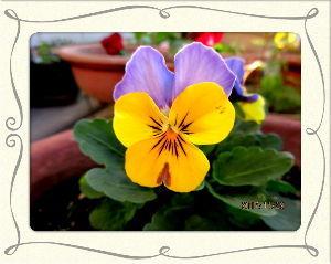 庭の花で四季を楽しむことに・・・ 今日も穏やかな小春日和に・・・  ハゼ釣り現場を覗きに一走り・・・  やはり釣り人が少なく釣果も今一