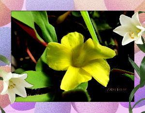 庭の花で四季を楽しむことに・・・ 連日穏やかな小春日和が続いてます・・・  室内に陽射しが入り込むので室温が20度まで上昇・・・  冬