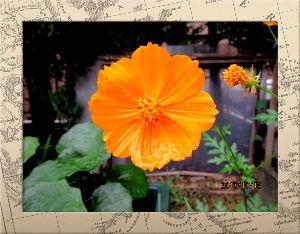 庭の花で四季を楽しむことに・・・ 朝から小雨模様の肌寒い日和に・・・  陽射しが無いので寒さも厳しいね・・・  ちょっと今の時期では寒