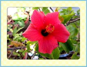 庭の花で四季を楽しむことに・・・ 今朝は厳しい冷え込みでしたが  陽射しがあるので徐々に気温が上がり  暖かさが戻り過ごしやすい日和・