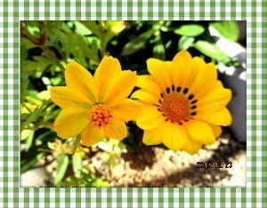 庭の花で四季を楽しむことに・・・ 何年ぶりかで小雪がちらつく冷たい天気に・・・  掛かり付けの医者の紹介状にて市立病院にて  心臓のカ