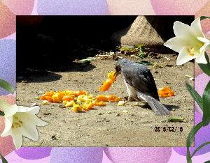 庭の花で四季を楽しむことに・・・ 朝から陽射しが射しこむ暖かな日和・・・  昨日雑貨類のまとめ買いをしたので  暫くは買い物の用事は無