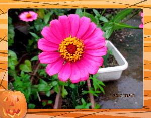 庭の花で四季を楽しむことに・・・ 今日も朝から小雨模様の不安定な天気・・・  寒さも異常なほどの冷え込み・・・  着るものも冬支度に切