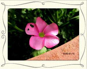 庭の花で四季を楽しむことに・・・ 今日もいつの間にか気温も上がりポカポカ陽気に・・・  今年初の定期検診日に家内と一緒に・・・  何処