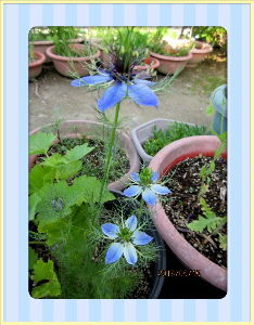 庭の花で四季を楽しむことに・・・ 陽射しが強く気温も上がり夏日に・・・  久しぶりに家内と雑貨類の買い物に・・・  まとめ買いをして時