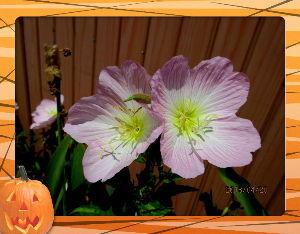 庭の花で四季を楽しむことに・・・ 陽射しが強いが爽やかな風が吹き抜け  心地よい初夏の陽気になったね・・・  留守番を頼まれて動きが取