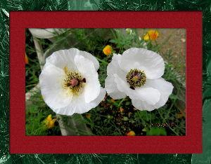 庭の花で四季を楽しむことに・・・ 今日はアユ釣りの解禁日・・・  あまり期待しないでのんびり出かける・・・  予想通り釣果は今一で早々