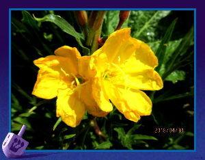 庭の花で四季を楽しむことに・・・ 気温が25度オーバーの夏日になり汗ばむほど・・・  週末には寒気が流入するというので  着るものも今