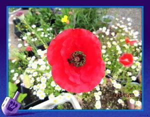 庭の花で四季を楽しむことに・・・ 連日爽やかな夏日に・・・  吹き抜ける風が心地いいので過ごしやすいね・・・  庭の花も賑やかに咲いて