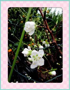 庭の花で四季を楽しむことに・・・ 強風が吹き荒れて騒々しいね・・・  電線の風切り音が特に騒々しいね・・・  吹き抜ける風もかなり冷た