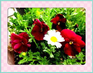 庭の花で四季を楽しむことに・・・ 天気が下り坂で穏やかな日和・・・  もう何時降る出しても可笑しくない重そうな雲・・・  彼岸の入りの