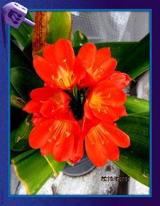 庭の花で四季を楽しむことに・・・ とうとう先ほどから小雨が降り出したようで・・・  陽射しが無いので気温も上がらず肌寒い感じ・・・
