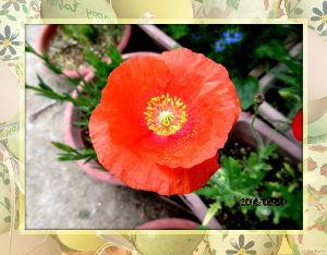 庭の花で四季を楽しむことに・・・ 昨日同様足が冷たさを感じますね・・・  陽射しも弱く気温が上がらないようだね・・・  腰の痛みが徐々